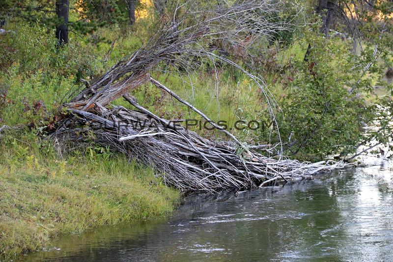 2019-09-12_683_Tetons_Beaver Lodge.JPG