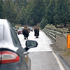 2019-09-10_352_Yellowstone_Bison on Road.JPG