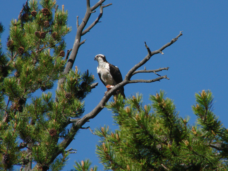 Osprey - Pelican Point Trail