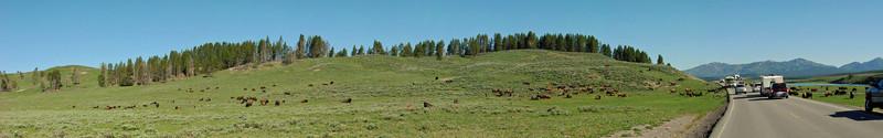 Bison Jam in Hayden Valley (best viewed at X3 size