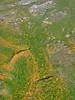 Green (cool water) and yellow (hot water) algae at Norris Geyser Basin