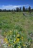Teton Meadow