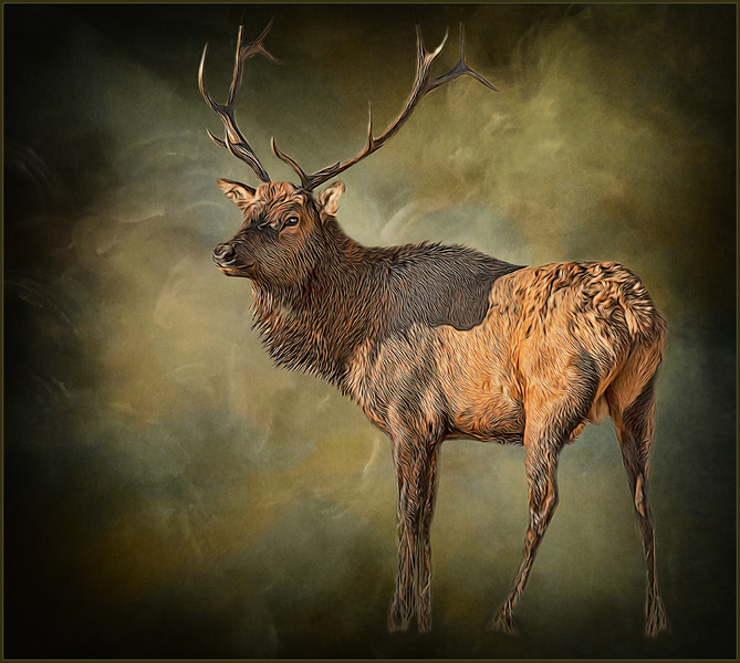 Elk on Canvas