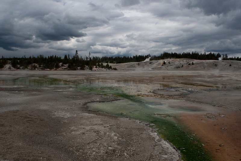 Norris Geyser Basin.  The temperature of water in the pools can reach 203°F.  This area of Porcelain Basinis is nearly void of plant life. Acidic and low alkaline water is responsible for creating this unique environment. Sulfur brought to the surface oxidizes to form sulfuric acid, which creates an acidic environment that is hostile to plant life. The springs have deposited a thin layer of porcelain-like silica, stained yellow and orange by sulfur and iron oxides. The crust is fragile and new springs are constantly forming and breaking through.