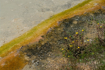 20100712_Yellowstone_2936