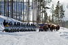 Snowmobilers pull off to the side to let Bison pass, Red Snowcoach coming forward, Winter, Yellowstone National Park, Wyoming, USA, North America