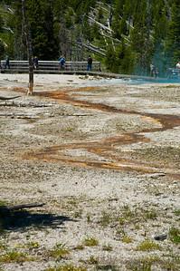 20100712_Yellowstone_2964