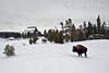 Winter, Bison, Old Faithful Inn,  Yellowstone National Park, Wyoming, USA, North America