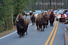 Traffic Jam caused by Bison on the Road in Yellowstone National Park, Wyoming, USA, North America