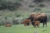 Bison Kids