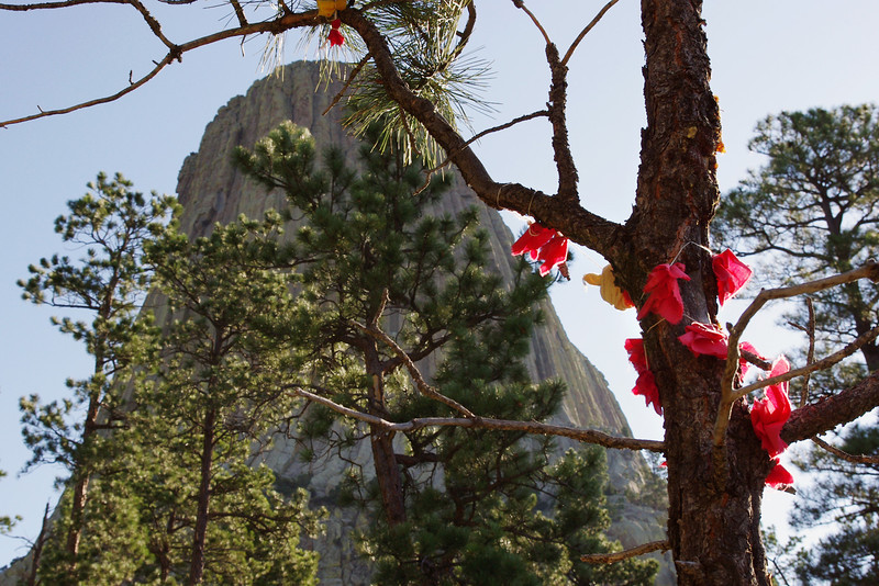Native American prayer offerings on pine tree, Devil's Tower National Monument, South Dakota. Several tribes consider this area to be sacred.