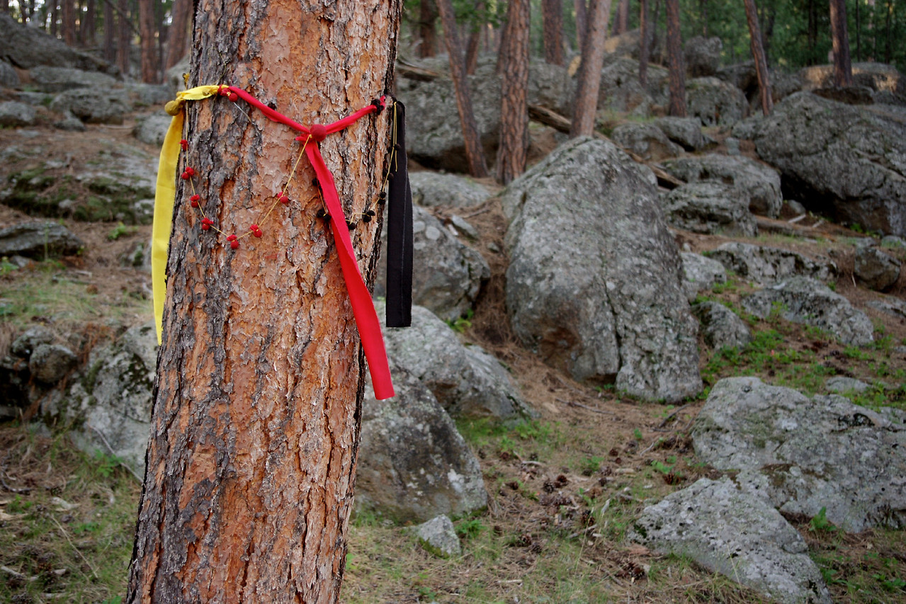 Native American prayer offerings on pine tree, Devil's Tower National Monument, South Dakota.