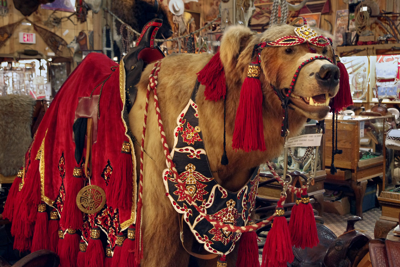 This highly decorated bear can be found in the cowboy museum at King's Saddlery, Sheridan, Wyoming.