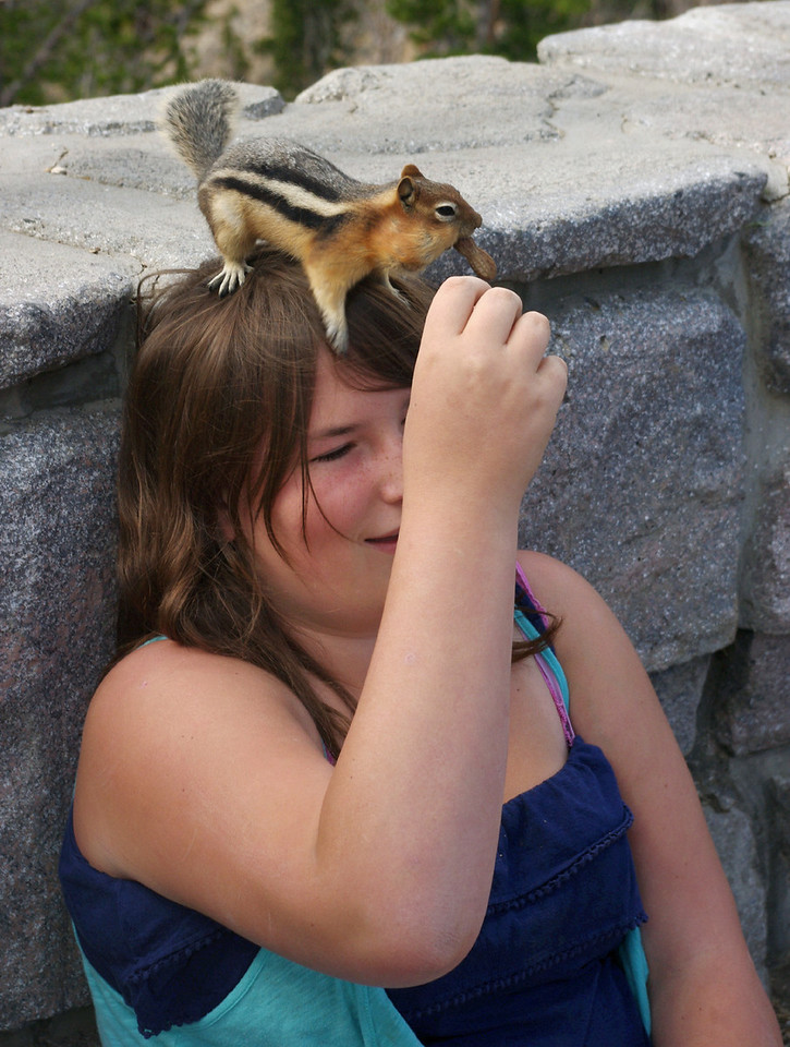 Golden mantled ground squirrel sitting on the head of a child while eating peanuts. Beartooth Highway (Wyoming 212, NE of Yellowstone National Park).