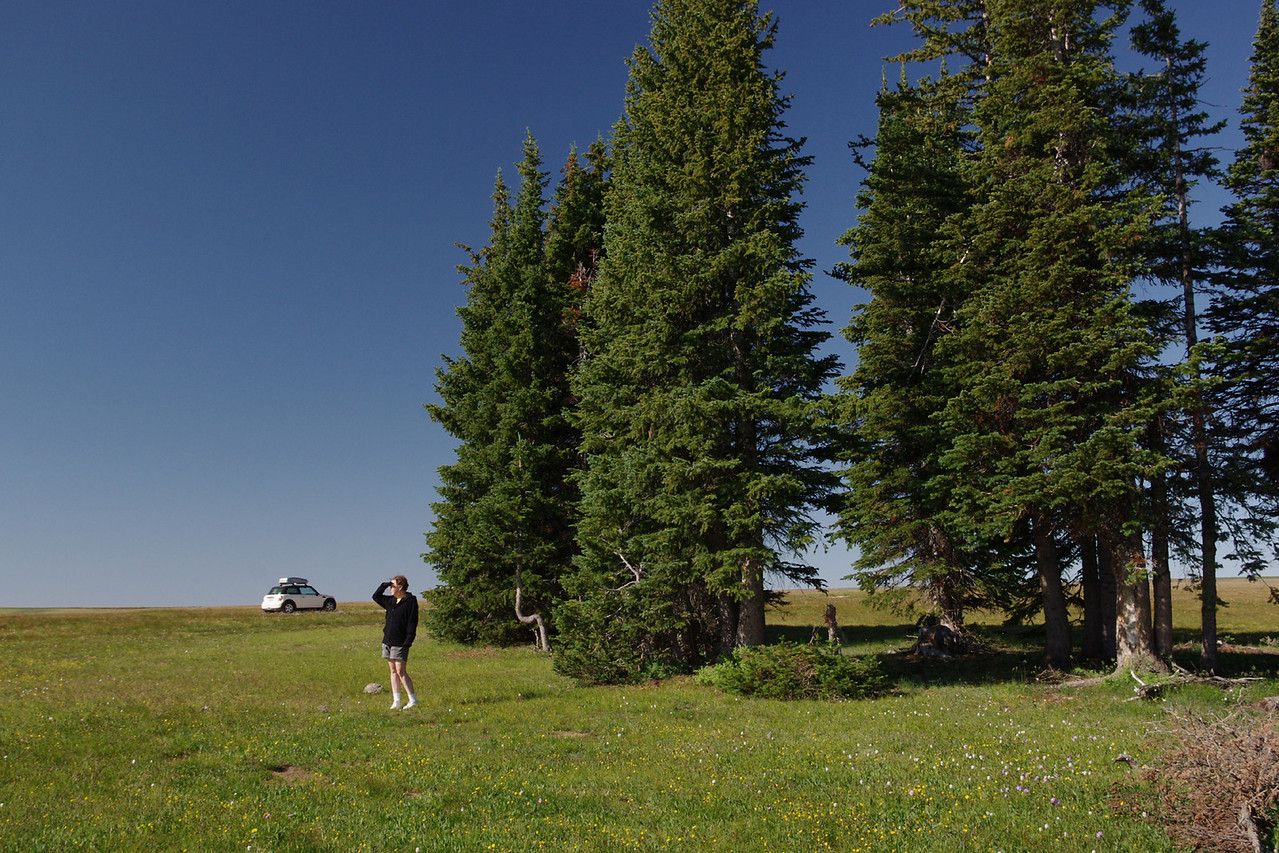Rita scans the horizon in a high Wyoming meadow.