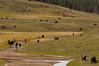 Bison, Antelope Creek, Yellowstone