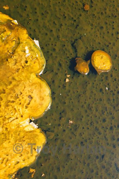 Bacteria mat at Upper Geyser Basin, Yellowstone