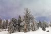 059 Yellowstone2006 Day4 Jan24 north of Old Faithful