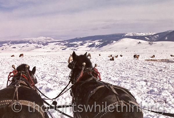 014 Yellowstone2006 Day2 Jan22 sleigh ride