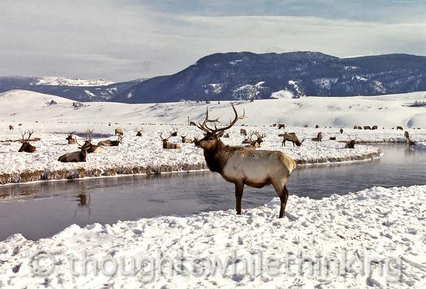 017 Yellowstone2006 Day2 Jan22 Elk Refuge