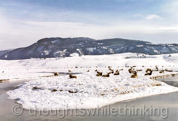 015 Yellowstone2006 Day2 Jan22 Elk Refuge