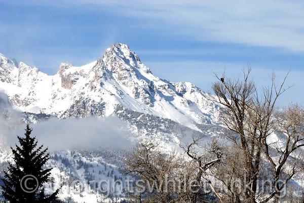 013 Yellowstone2006 Day2 Jan22 Grand Teton Moose Junction
