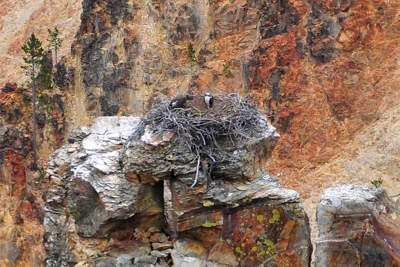 canyon birds BMF_1224