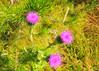 flowerBMF_1699