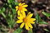 flowerBMF_1685