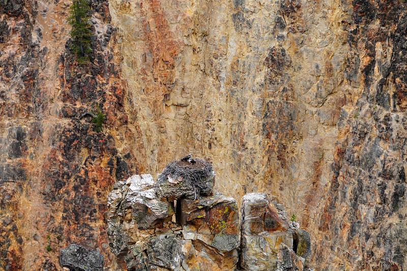 canyon birds BMF_1231