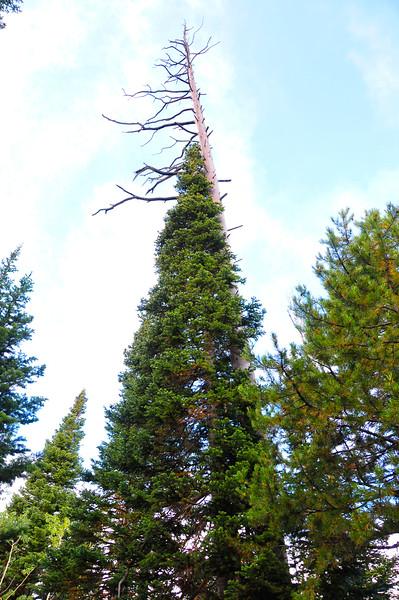 treeBMF_1629