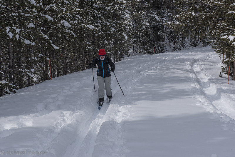 Lisa skiing through the woods. There was a huge amount of soft, powdery snow everywhere in this part of the park. Lots of fun!