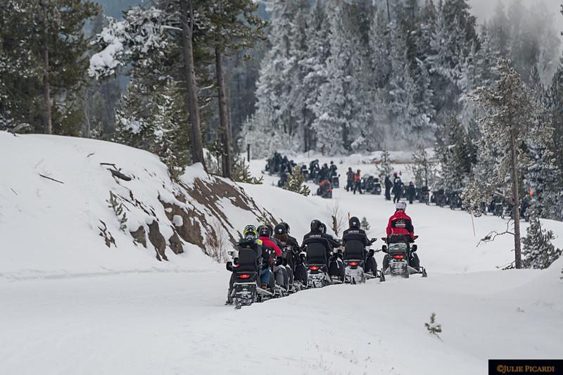 Rush Hour in Yellowstone