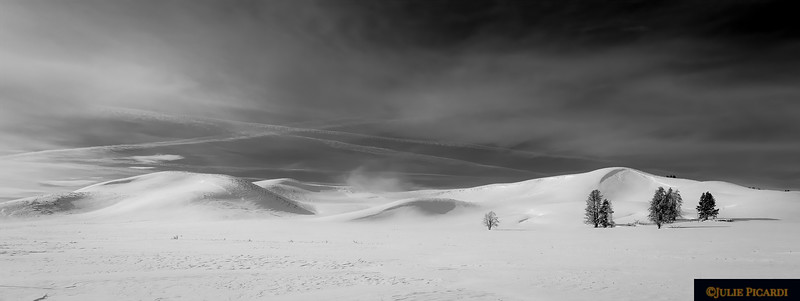 Lone Tree  - Hayden Valley in Monochrome