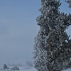 Frost on the trees, Geyser Basin