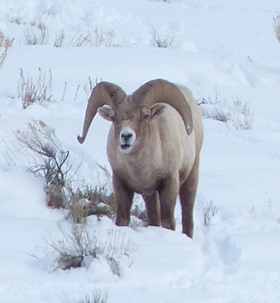 National Elk Refuge 027