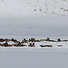 National Elk Refuge 001