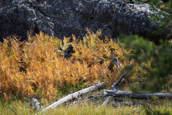 Fall Ferns III