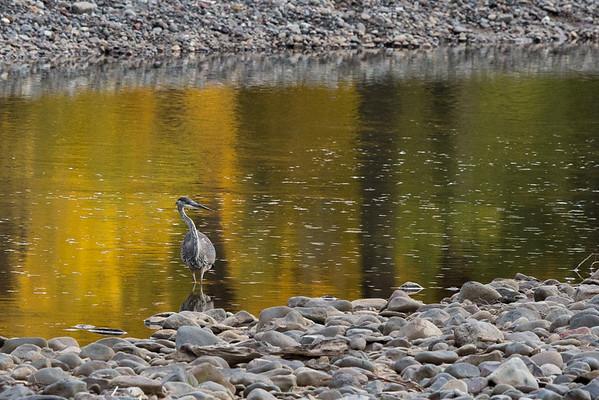 Fall Reflections I