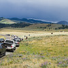 People watching bisons in Lamar valey, Yellowstone national park