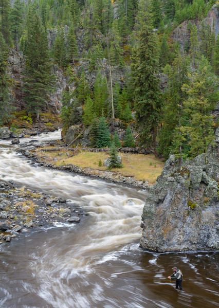 Fly fisherman in Firehole River