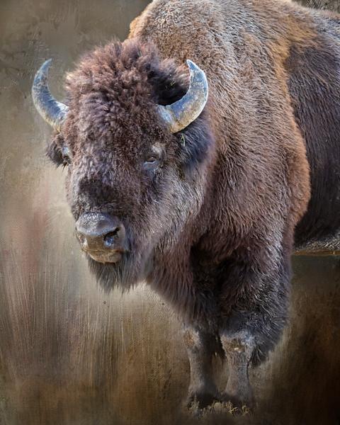 Textured Bison