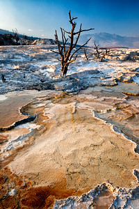 Trees captured by Mammoth Hot Springs formations