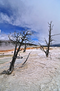 Upper Terrace, Mammoth Hot Springs, Yellowstone......My favorite scenic pic of the trip.