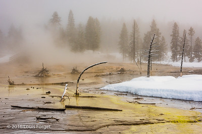 Early morming, on the way to Lower Geyser Basin, Yellowstone National Park