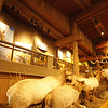Yellowstone Grand Tetons visitor center