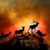 Elk Silhouette at Sunset