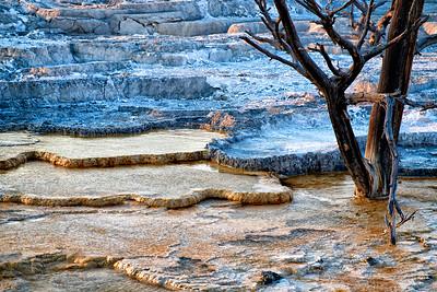 Trees at Mammoth Hot Springs