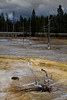 Lower Geyser Basin, Yellowstone National Park