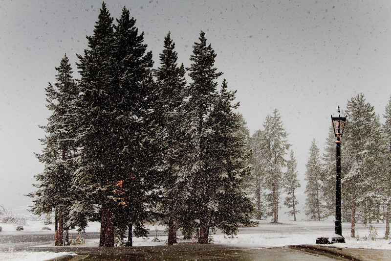 Christmas in June, Yellowstone National Park
